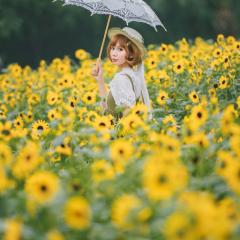 四季沐歌-向日葵